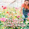 Aromatizante-De-Ambientes-Glade-Edici-n-Limitada-Frescura-De-Rosas-En-Aerosol-360ml-5-482281